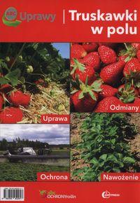 ABC uprawy Truskawki w polu