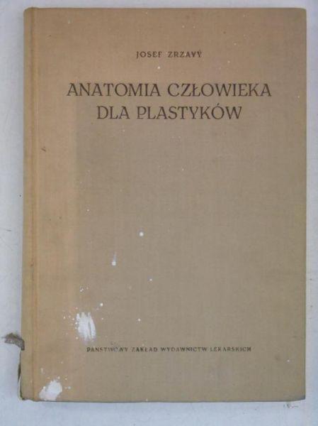 Anatomia człowieka dla plastyków