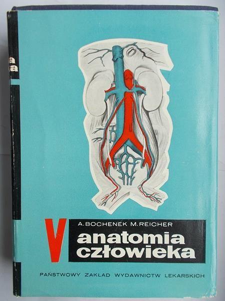 Anatomia człowieka 3