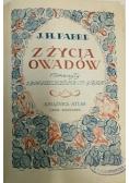 Z życia owadów, 1925 r.