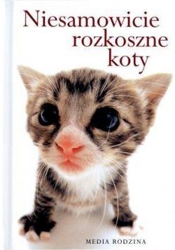 Niesamowicie rozkoszne koty