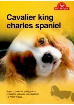 Pies Na Medal. Cavalier King Charles Spaniel