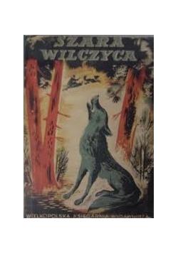 Szara Wilczyca ,1949r.
