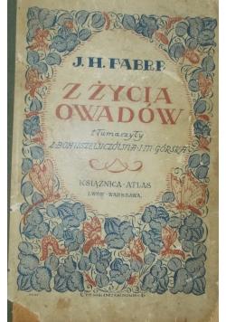Z życia owadów, 1925r.