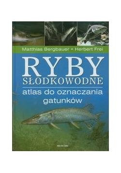 Ryby słodkowodne Atlas do oznaczania gatunków