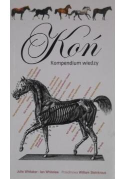 Koń. Kompendium wiedzy