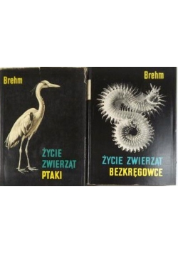 Życie zwierząt bezkręgowce / Ptaki