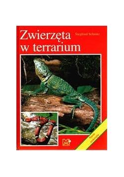 Zwierzęta w terrarium