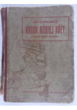 Krzak dzikiej róży, 1907 r.