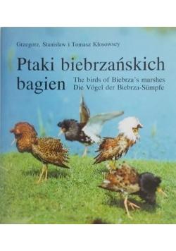 Ptaki biebrzańskich bagien