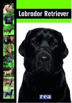 Labrador retriever REA