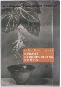 Uprawa hydroponiczna roślin