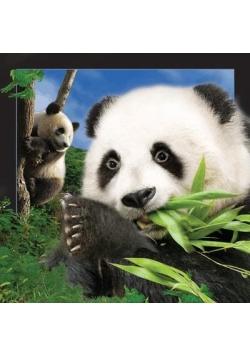 Pocztówka 3D Panda
