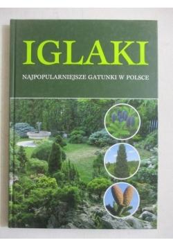 Iglaki. Najpopularniejsze gatunki w Polsce