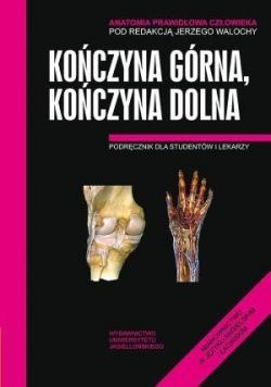 Anatomia prawidłowa człowieka. Koń.górna,koń. dol.