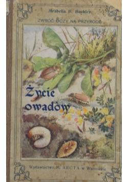 Życie owadów , 1911 r.