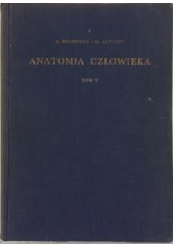 Anatomia człowieka. Tom V