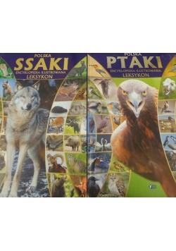 Polska: Ptaki/Ssaki