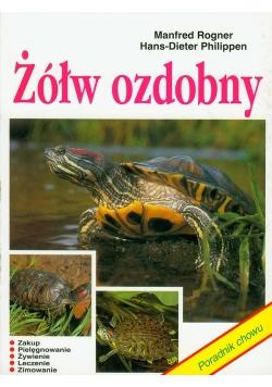 Żółw ozdobny