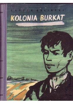 Kolonia Burkat