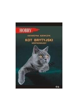 Kot brytyjski krótkowłosy w.2