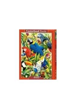 Castorland Puzzle 1000, Nowa