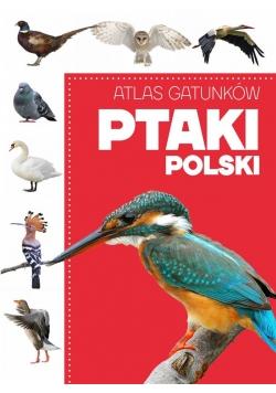 Atlas gatunków. Ptaki Polski
