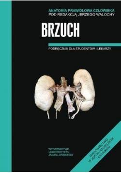 Anatomia prawidłowa człowieka. Brzuch