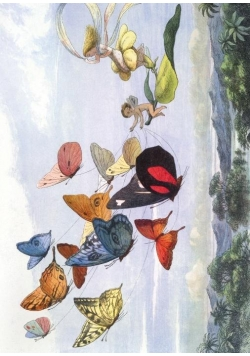 Karnet B6 z kopertą The Fairy Queen