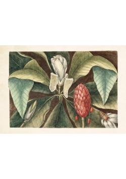 Karnet ST298 B6 + koperta Magnolia