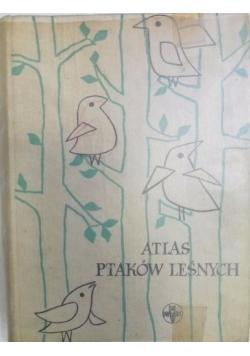 Atlas ptaków leśnych