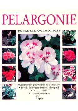 Pelargonie poradnik ogrodniczy