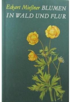 Blumen in Wald Und Flur