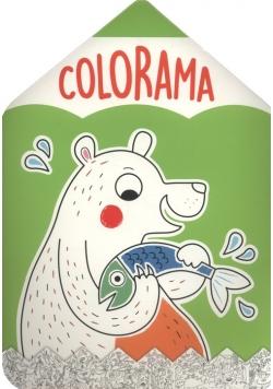 Colorama Niedźwiadek