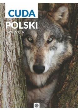 Imagine new II. Cuda Polski. Zwierzęta