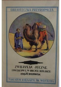 Zwierzęta juczne i pociągowe w obcych krajach, 1929 r.