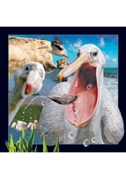Pocztówka 3D Pelikan