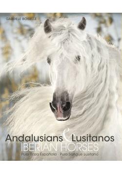 Andalusians Lusitanos
