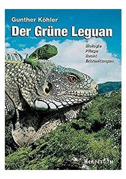 Der Grune Leguan