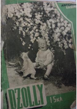 Dżollyis-ka, 1939r.