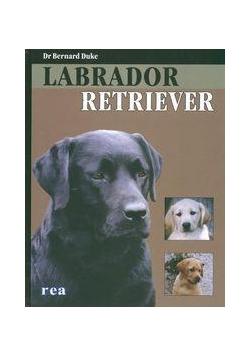 Psy. Labrador Retriever - Bernard Duke REA